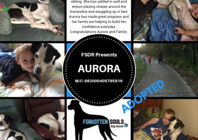 ADOPTED-Aurora