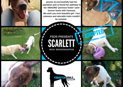adopted-scarlett-wollondilly