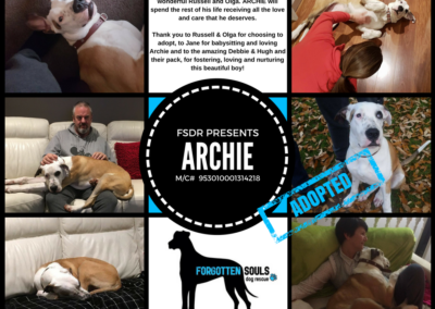 ARCHIE ADOPTED