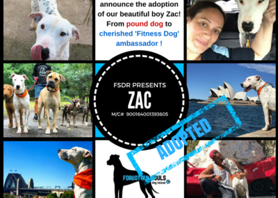 adopted-zac