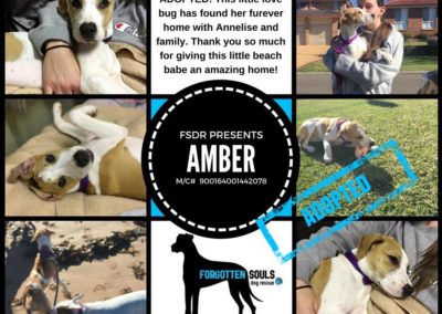 Amber adopted