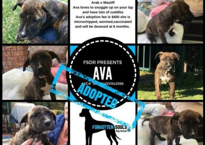 Ava adopted