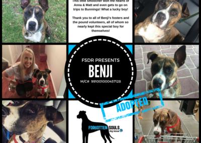 benji-adopted