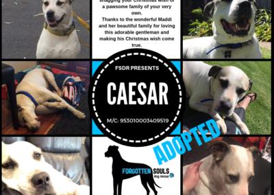 CAESAR-adopted