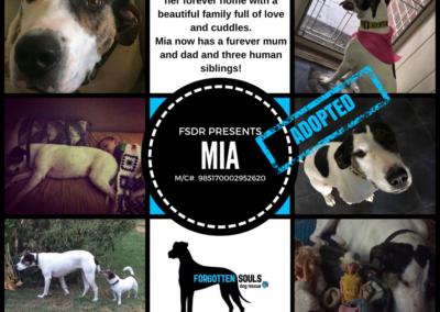 mia-ba-adopted