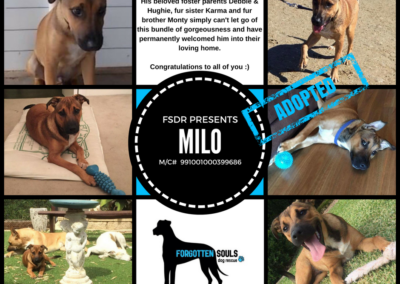 milo-adopted
