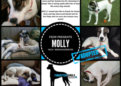 Molly Adopted