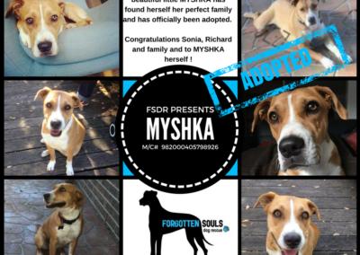 Myshka Adopted