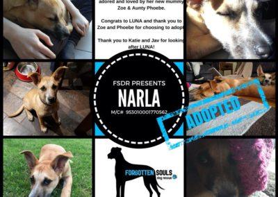 Narla adopted