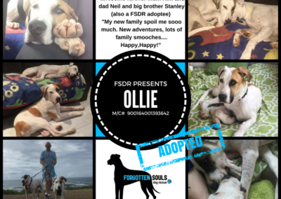 ollie-adopted