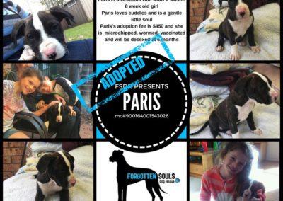 Paris adopted