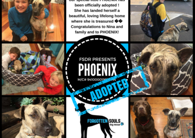 Phoenix adopted