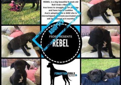 Rebel Adopted