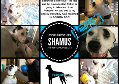 shamus-adopted