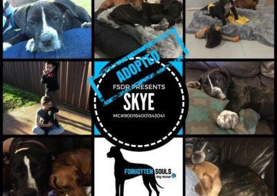 Skye adopted