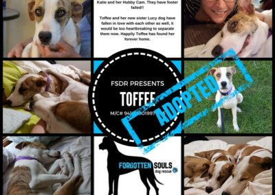 TOFFEE Adopted