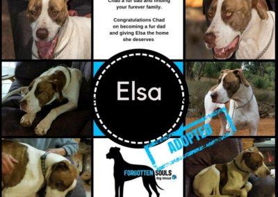 elsea-adopted