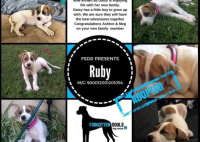 ruby-adopted