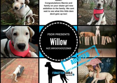 willow-adopted