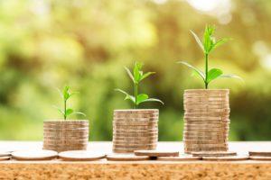 Money Plants - Image